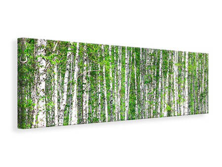 Panoramic Canvas Print The Birch Forest