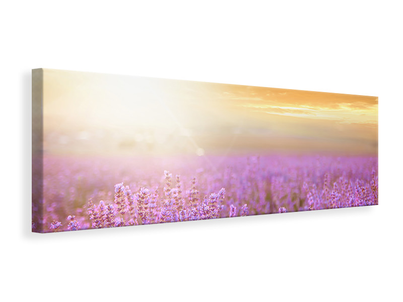 Leinwandbild Panorama Sonnenuntergang beim Lavendelfeld