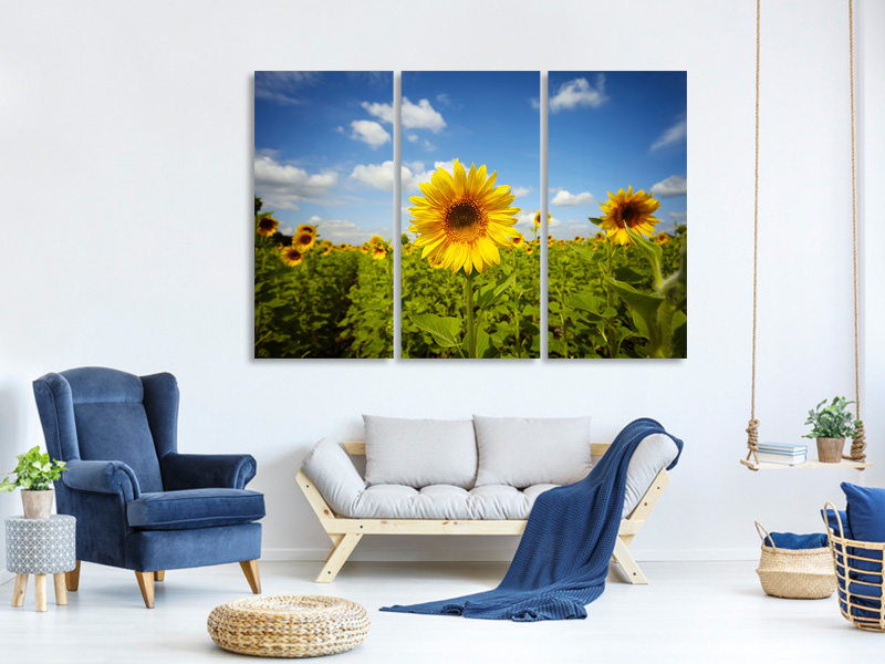 3 Piece Canvas Print Summer Sunflowers