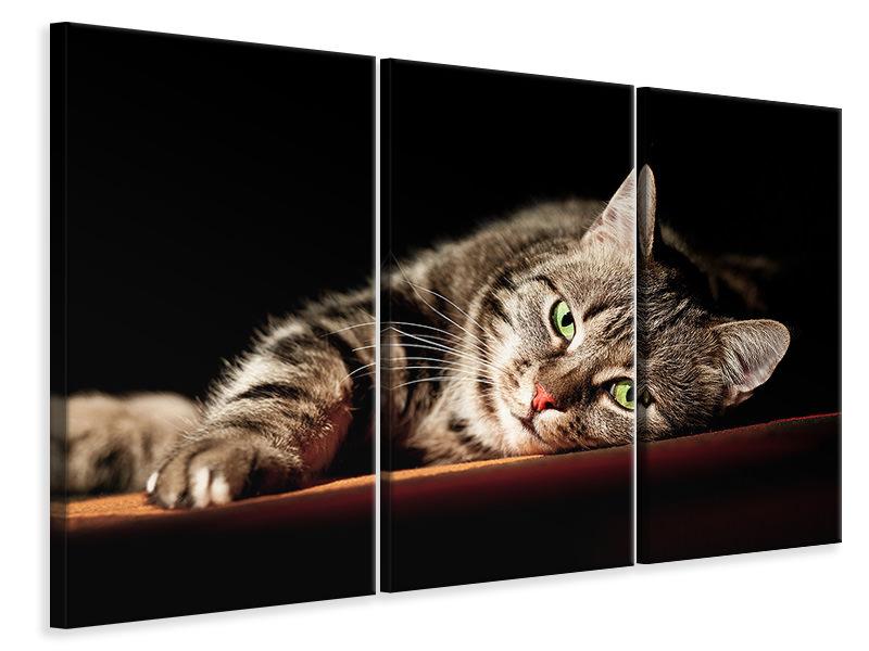 Leinwandbild 3-teilig Entspannte Katze