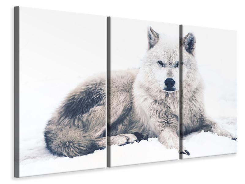 Leinwandbild 3-teilig Der Wolf