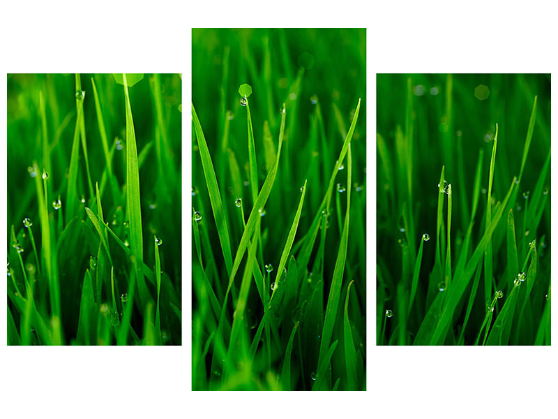 Modern 3 Piece Canvas Print Grass With Morning Dew