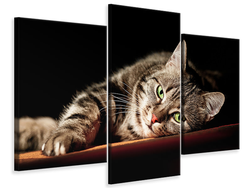 Leinwandbild 3-teilig modern Entspannte Katze