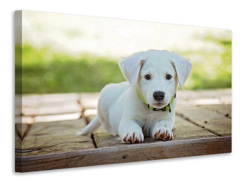 Leinwandbild Süsses Hunde Baby