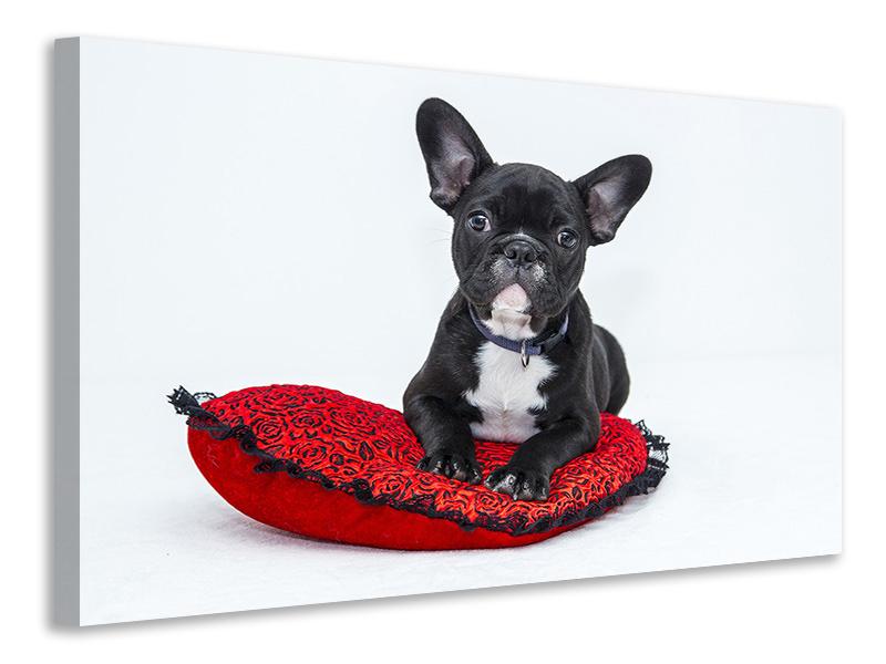 Leinwandbild Bulldogge zum Verlieben