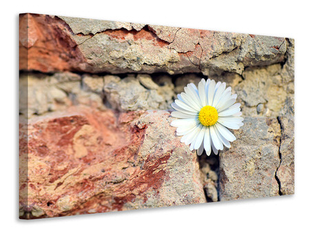 Canvas print Flower in the wall