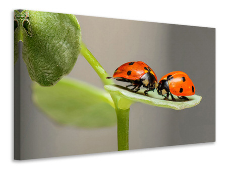 Canvas print 2 ladybirds