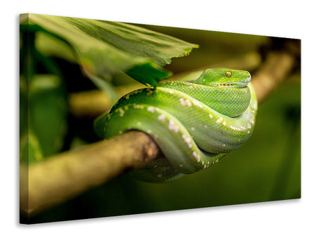 Canvas print Green snake