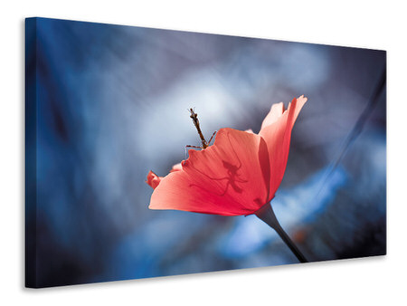 Canvas print The Poppy Master