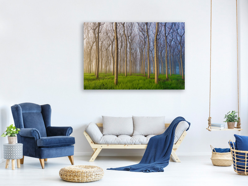 Tableau sur toile Morning Of The Forest