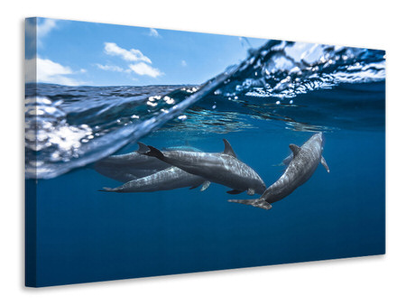 Canvas print Dolphins