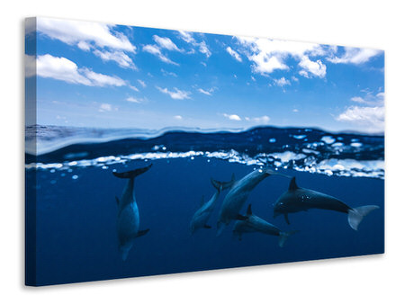 Tableau sur toile Between Air And Water With The Dolphins