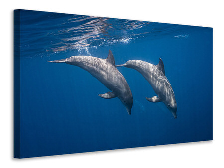 Canvas print Two Bottlenose Dolphins