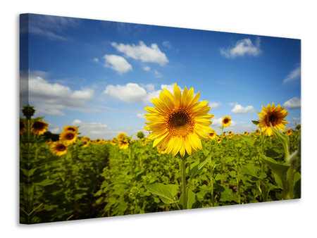 Canvas print Summer Sunflowers