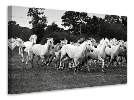 Canvas print The Mustang Herd