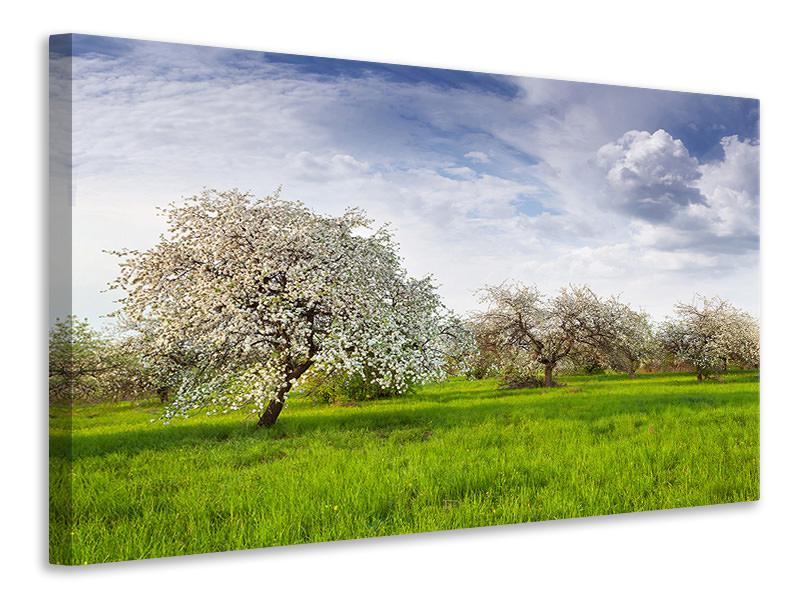 Leinwandbild Apfelbaum-Garten