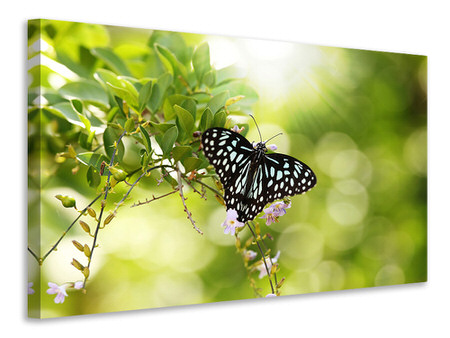 Canvas print Papilio Butterfly XXL