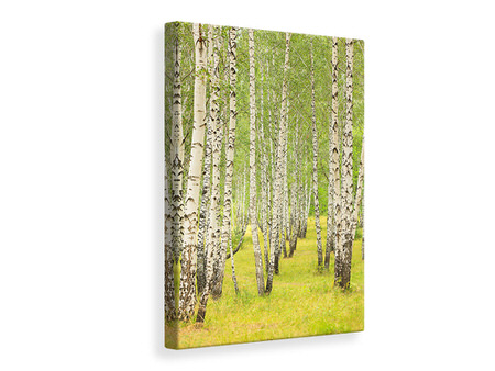 Canvas print The Birch Forest In Late Summer