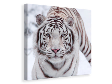 Canvas print The King Tiger