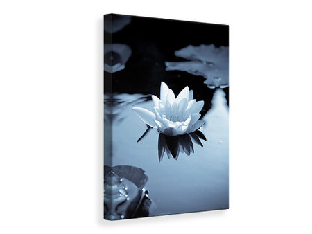 Canvas print Black And White Photograph Waterlily