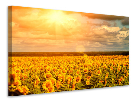 Canvas print Golden Light Sunflower