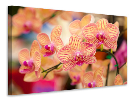 Canvas print Exotic Orchids