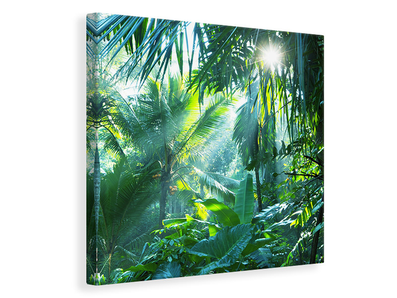 Canvas print In Tropical Forest