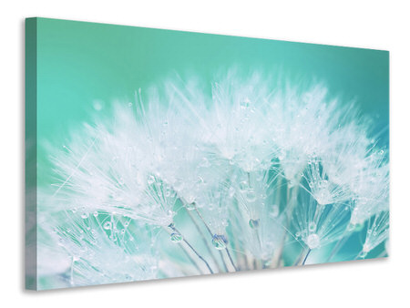 Canvas print Close Up Dandelion In Morning Dew