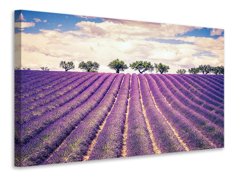 Leinwandbild Das Lavendelfeld