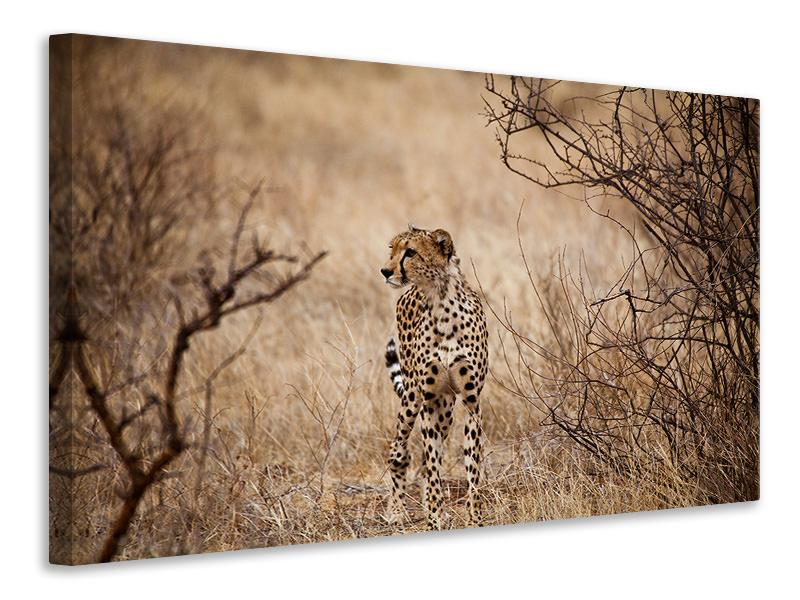 Leinwandbild Eleganter Gepard