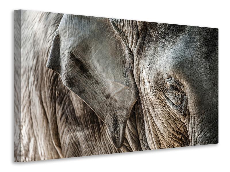 Leinwandbild Close Up Elefant