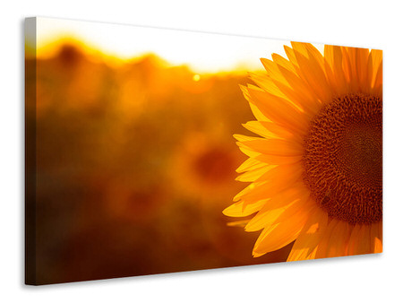 Canvas print Macro Sunflower