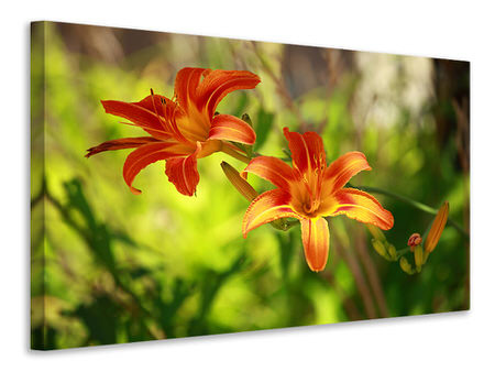 Canvas print Lilies In Nature