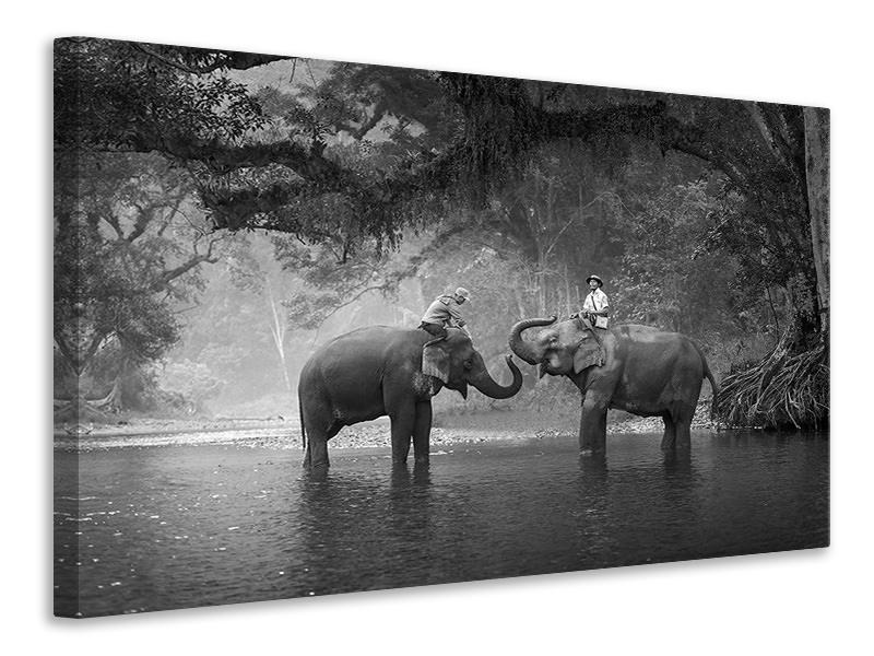 Leinwandbild Zwei Elefanten